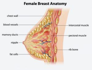 عوامل اصلی بروز افتادگی سینه ها