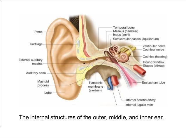 نکاتی مراقبتی برای بهبود سریعتر پس از جراحی زیبایی گوش